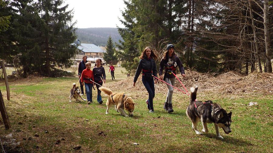 Balade Nature en cani-randonnée