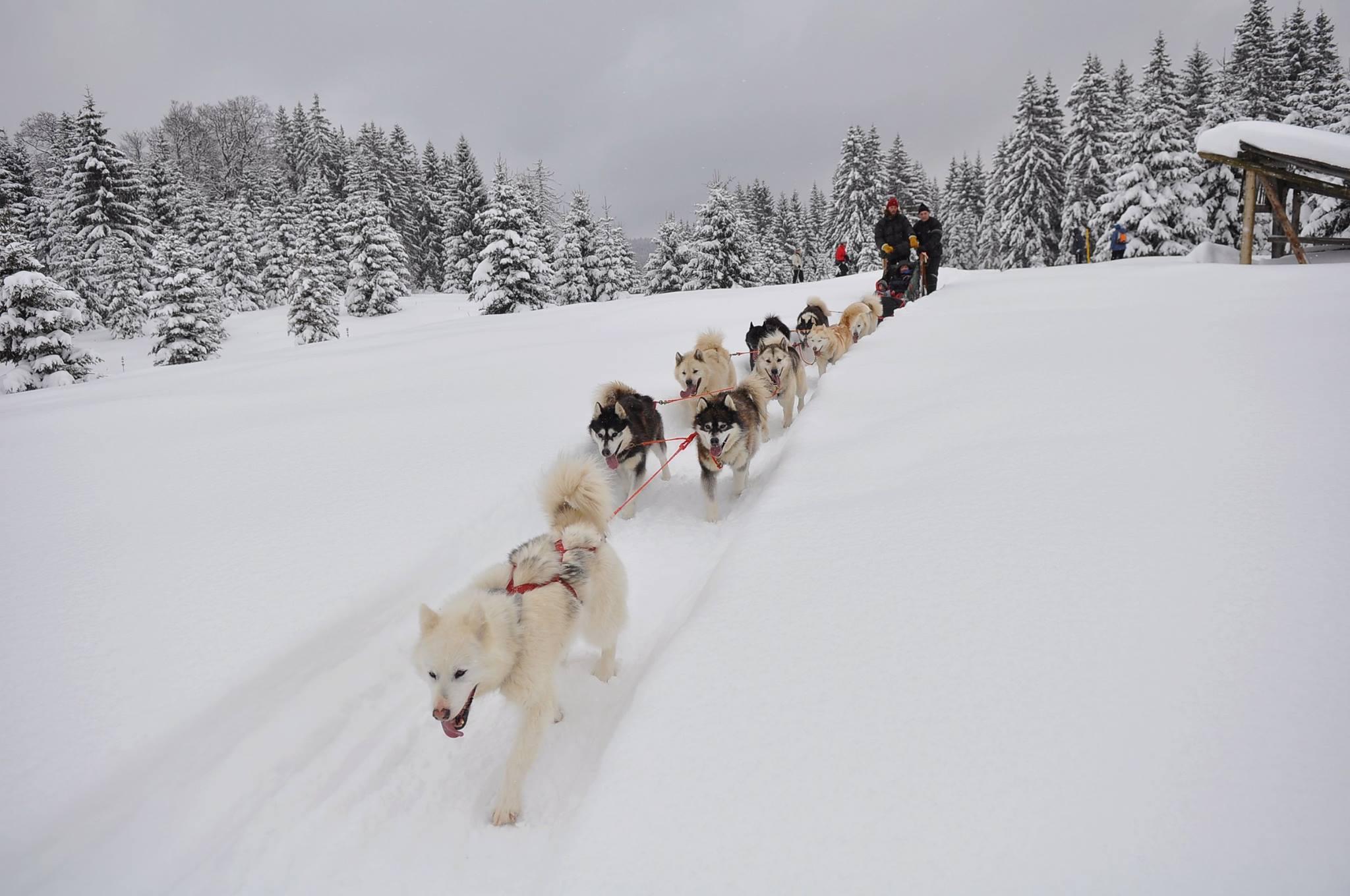 Cani-randonnée itinérante